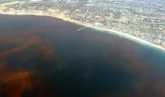 Chaos Theory May Help Predict Red Tides