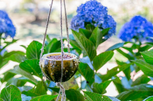 DIY A Natural Bird Feeder