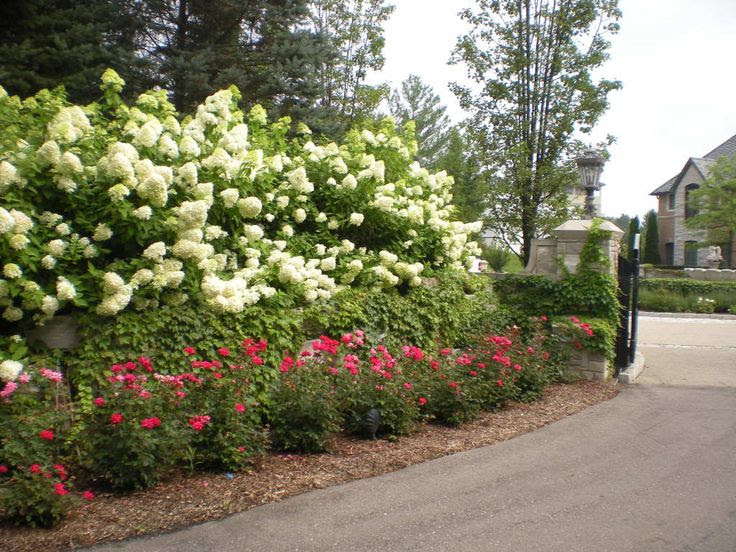 Backyard Project Guide To Get Landscaping Ideas Knockout Roses