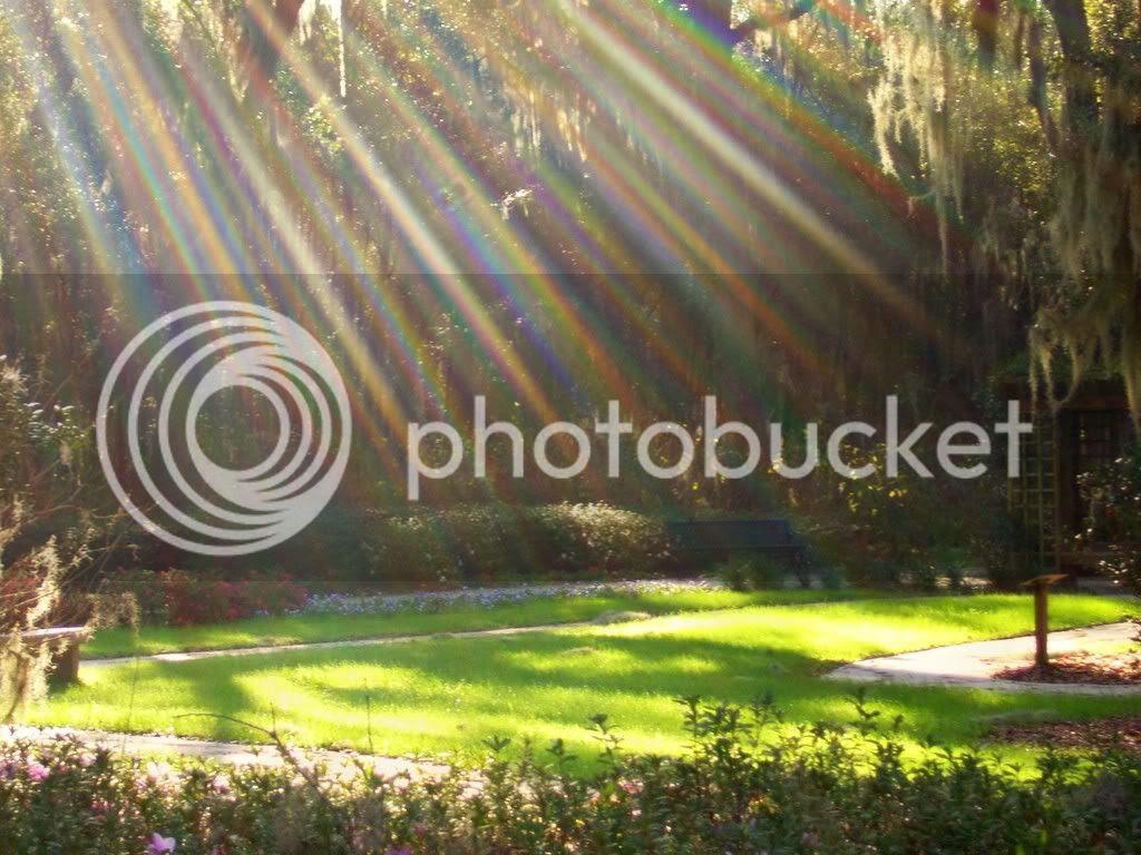 wallpaper pemandangan taman indah 66