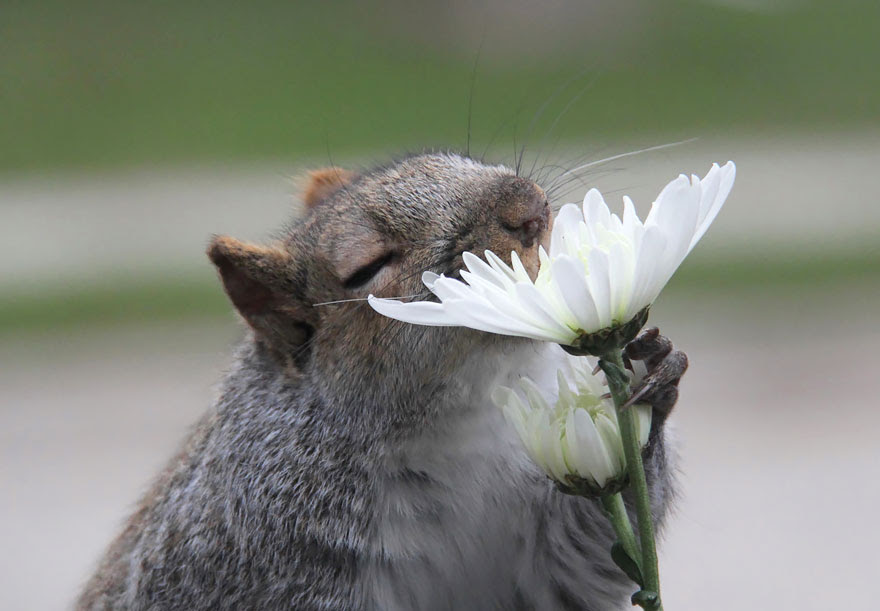 Flores de cheiro