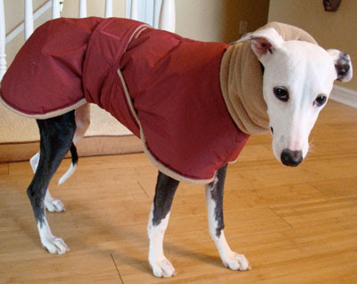 Sewing Pattern For Italian Greyhound Coat