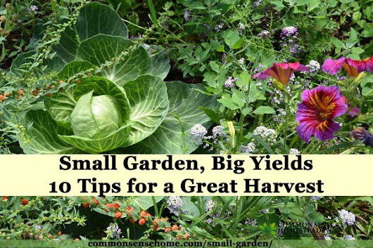 Small Garden, Big Yields - 10 Tips for a Great Harvest