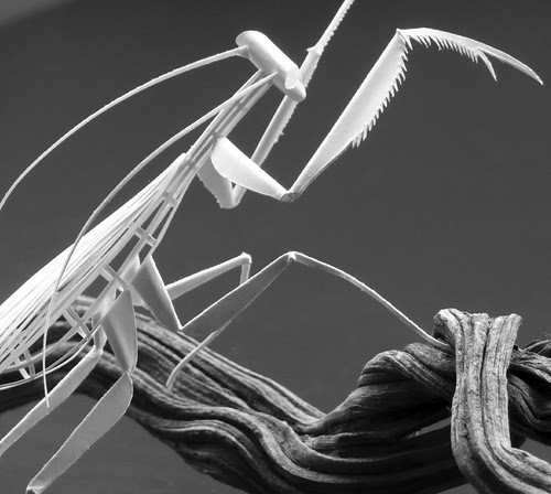 mantis-paper-sculpture