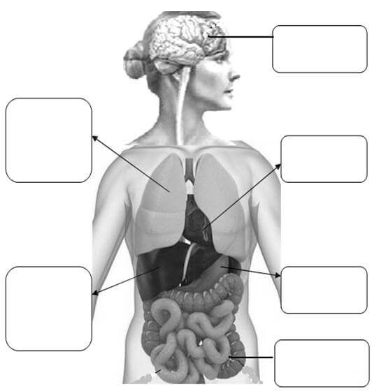 2 Sınıf Organlarımız Ve Görevleri Etkinlikleri