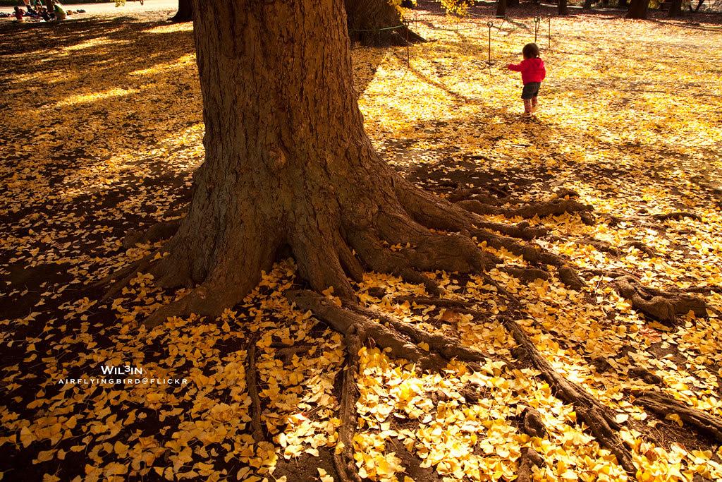 銀杏樹下的童年