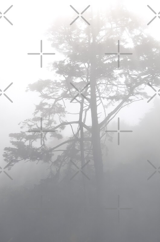 """Tree In The Fog"" by awanderingsoul 