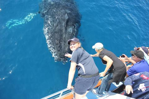 Premium 3/4 day Whale Watch tour -  Reservations