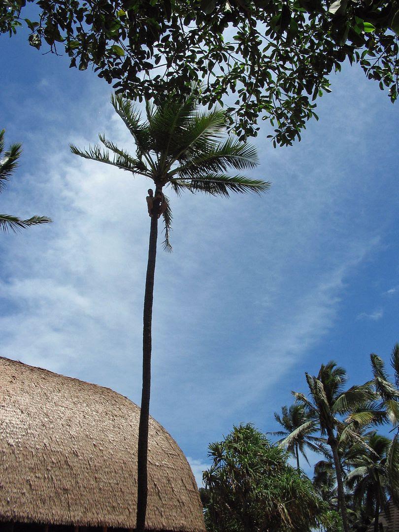 photo Hawaii10.jpg