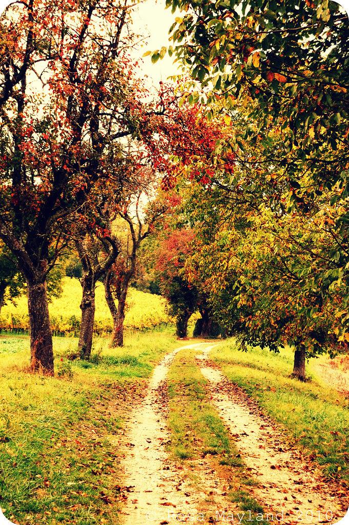Tree alley 1.1 bis