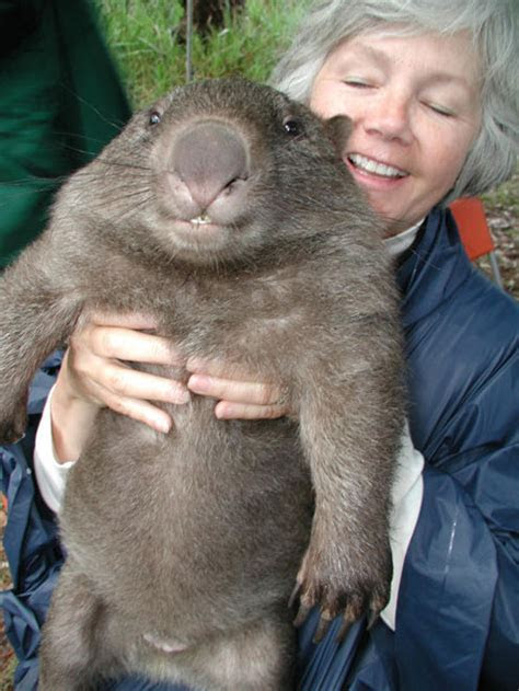 Cute Wombats   Cute Pictures & Videos   Geniusbeauty