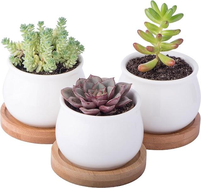 Top Rated StarPack Premium 3 Piece Mini White Ceramic Succulent Planter Pot Set