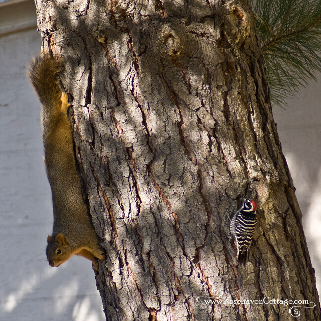 The woodpecker and the squirrel thoughtfully regarded one another