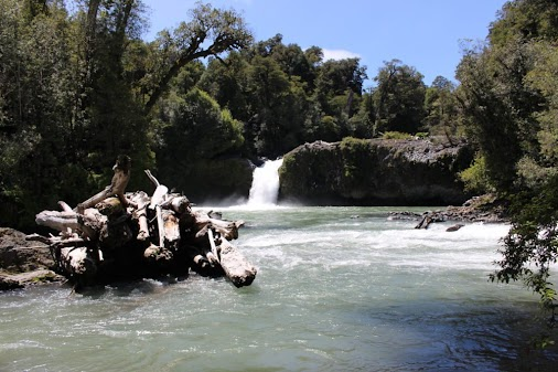 Puerto Montt and the Los Lagos region of Chile Part 2: Parque Nacional Puyehue and Another Failed Park...