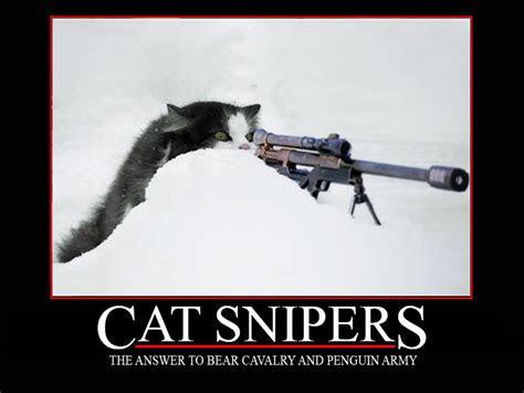 sniper kitten wallpaper wallpapersafari