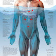 11 Reasons dehydration is making you fat and sick! | Expert Health Advice | Pinterest