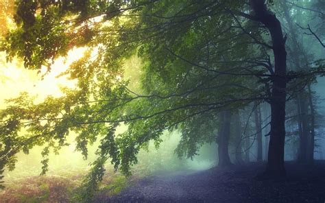 landscapes nature trees paths fairies mystical dawning