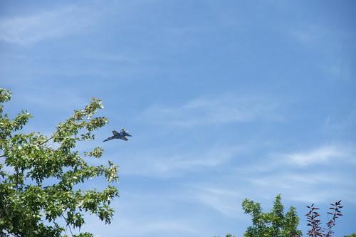 jet with tree
