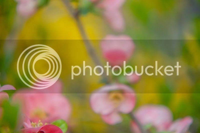 photo spring2_zpsc8b4167f.jpg