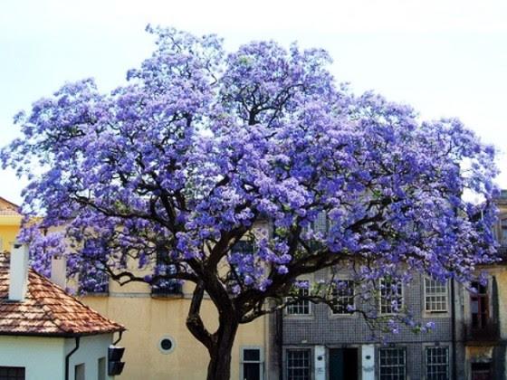 El Verdadero árbol De La Vida Viajes