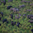 Africa's Elephants Are Being Slaughtered in Poaching Frenzy