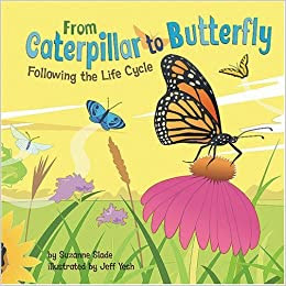 Its A Butterflys Life