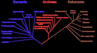 Albero filogenetico dei viventi