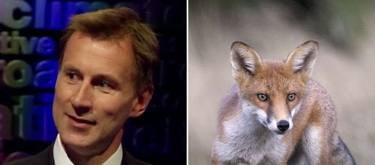 Fox hunting back on the agenda says Jeremy Hunt as Tories plan 'radical blitz' after election bloodbath