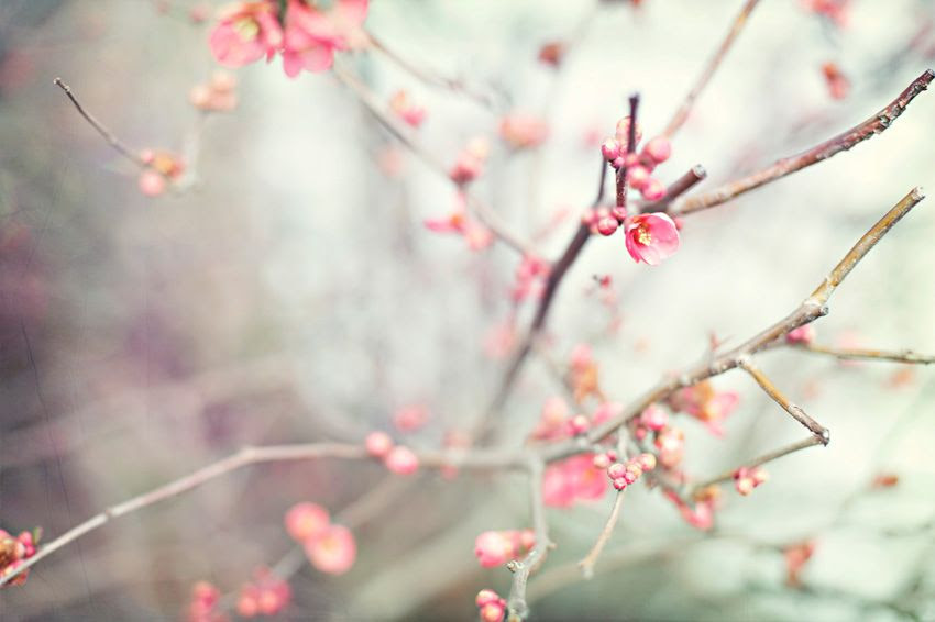 2.6.12, Even though we're in the middle of winter, things are already starting to bloom.