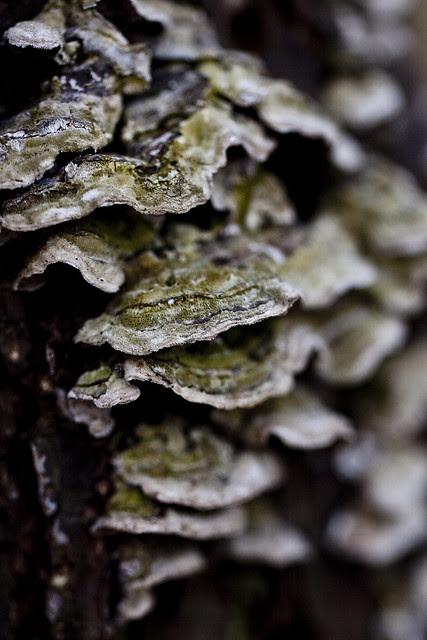 trunkfungus