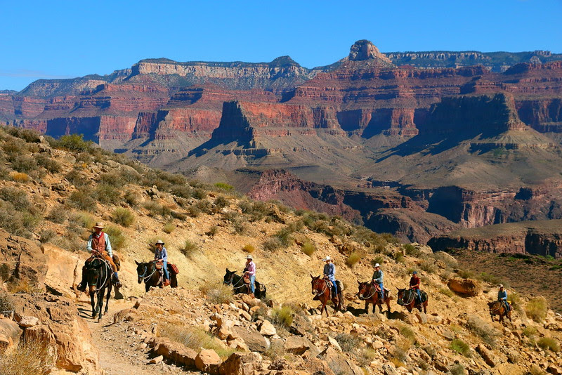 IMG_7863 Mule Team, South Kaibab Trail, Grand Canyon National Park