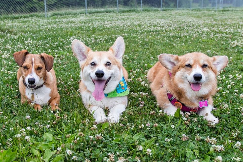 Saturday Corgi Smilers Ozzie Wally And The Amazing Adventures Of