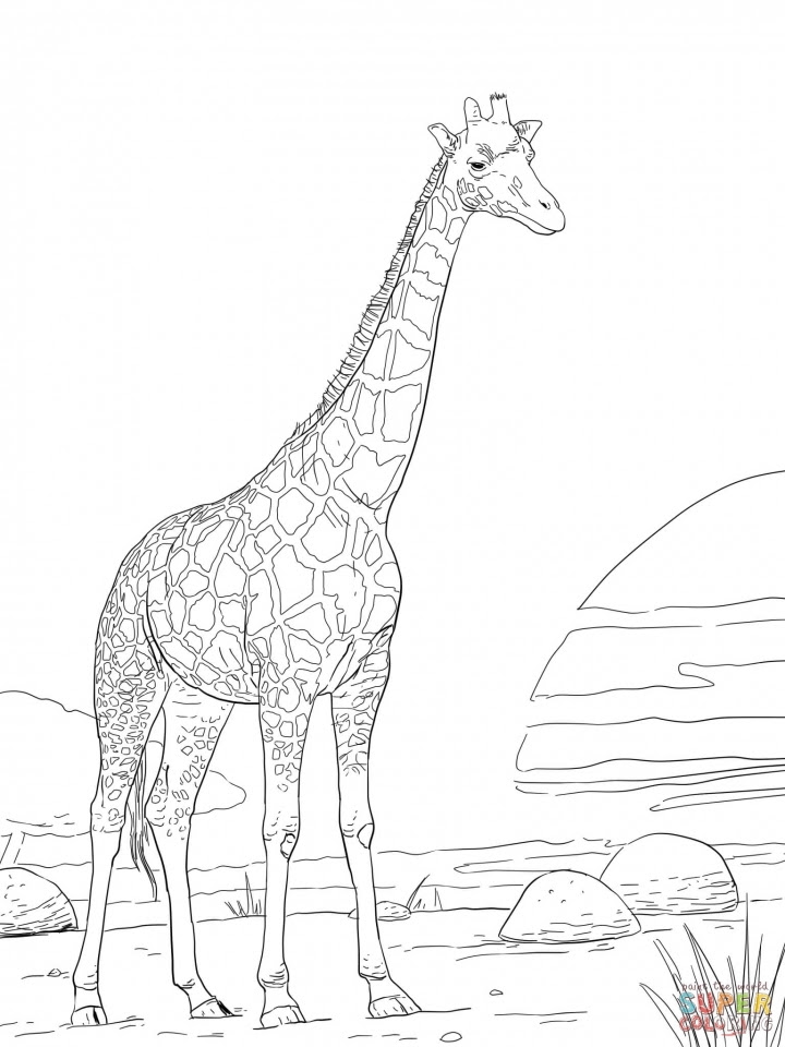 Get This Realistic Giraffe Coloring Pages for Adults 74916