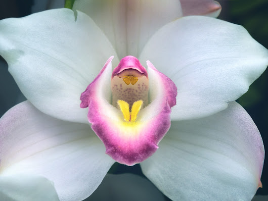 Core of the White Orchid - DLifeJourney