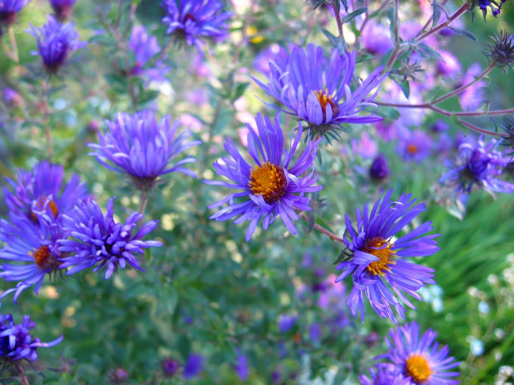 Lapham Peak Butterfly Garden Wild Flower - soul-amp.com