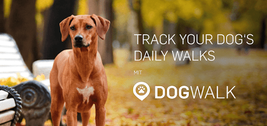 How often should you walk your dog? - Tractive Blog