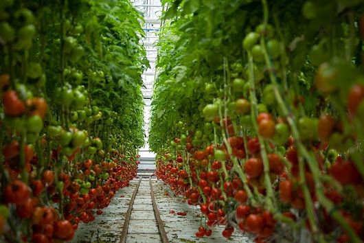 Why You Should Be Interested in Vertical Farming