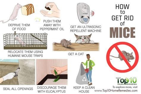 How To Get Rid Of Mice In The Home Remedies