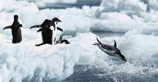 Five Fun Facts for Penguin Awareness Day