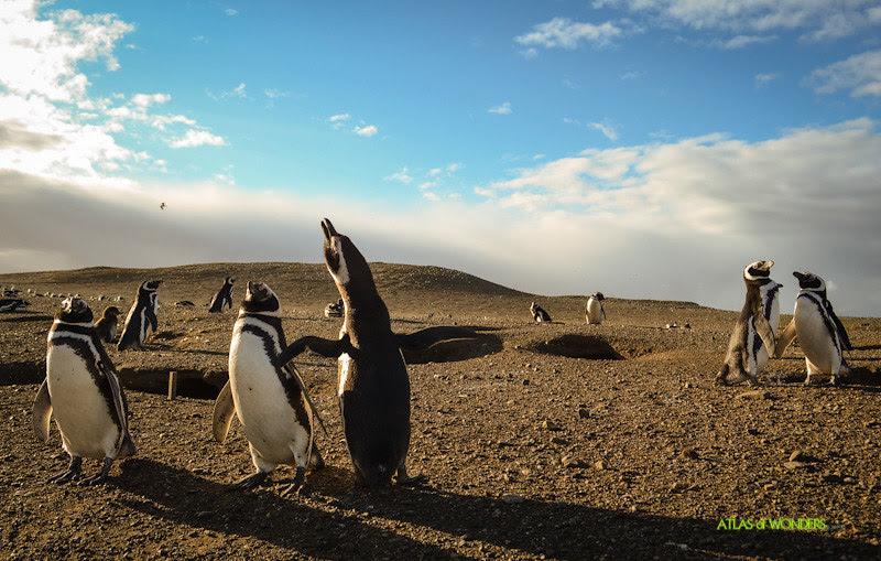 Isla de los pingüinos