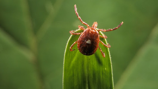 Are there new tick-borne illnesses on the horizon?