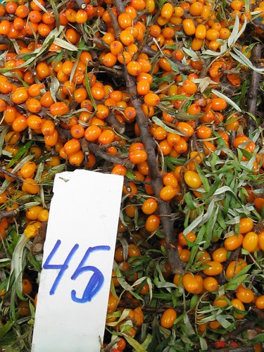 Tallinn Central Market: Sea buckthorn / Astelpaju