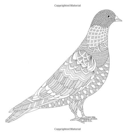 images   adult colouring pages