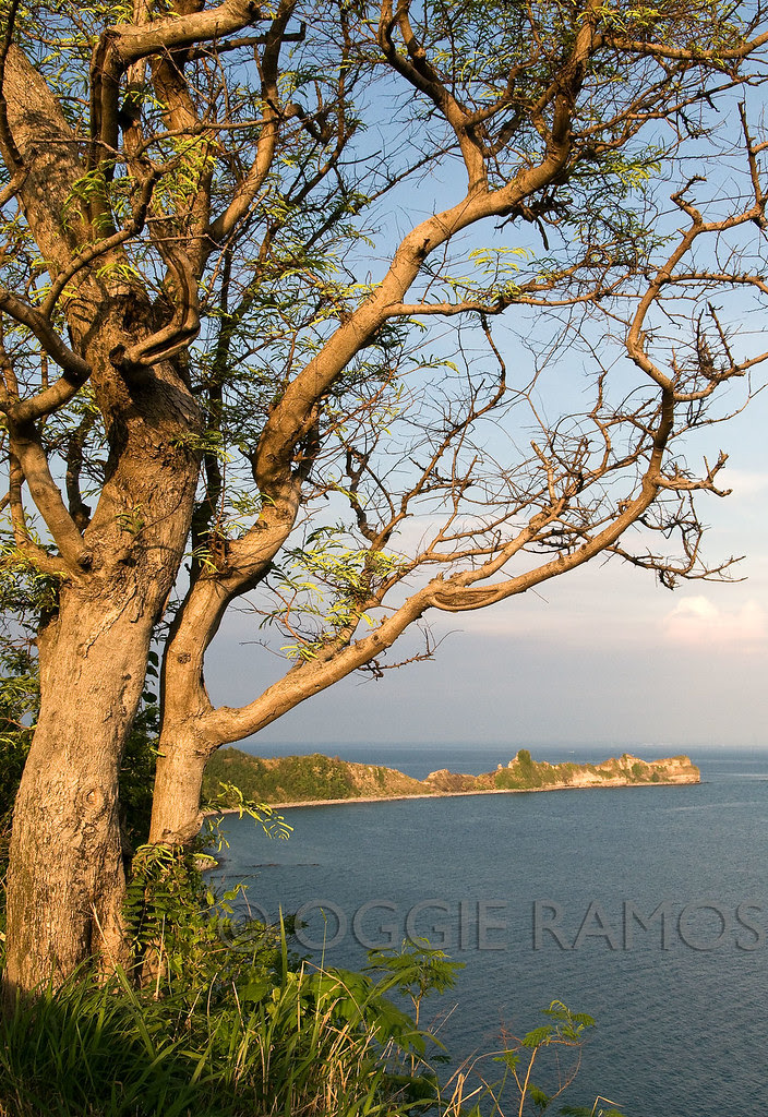 Corregidor - Tailside and Dramatic Tree