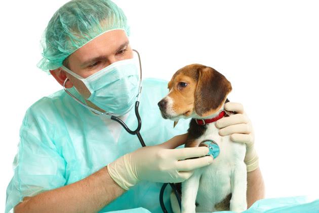 Elementos de uma doença em animais