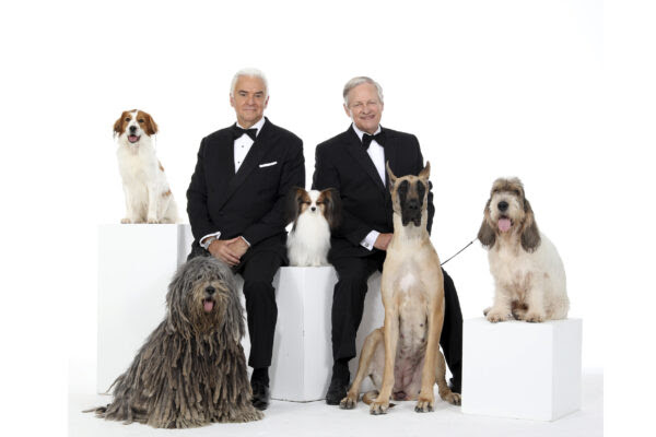 If you can't be there in person, watch the National Dog Show Presented by Purina on its annual Thanksgiving Day broadcast at noon on NBC. Photo courtesy of National Dog Show