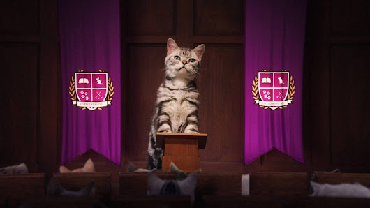 Millions of Cat Lovers Attend WHISKAS®' Kitten Kollege on YouTube