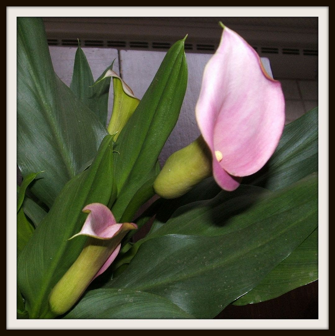 Calla Lily Birthday by Angie Ouellette-Tower for godsgrowinggarden.com photo 005_zpsa9dfaf82.jpg