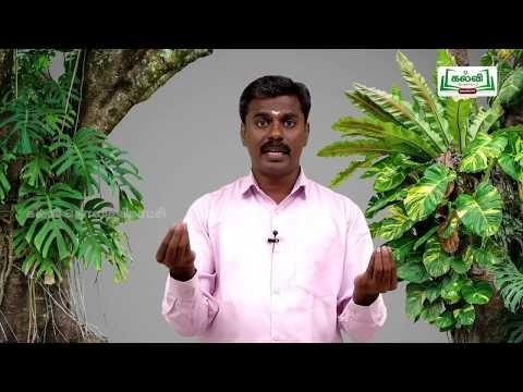 வகுப்பு 10 அறிவியல் தாவரங்கள் மற்றும் விலங்குகளில் இனப்பெருக்கம் பகுதி 2 Kalvi TV