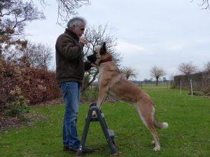 atividade física para cães